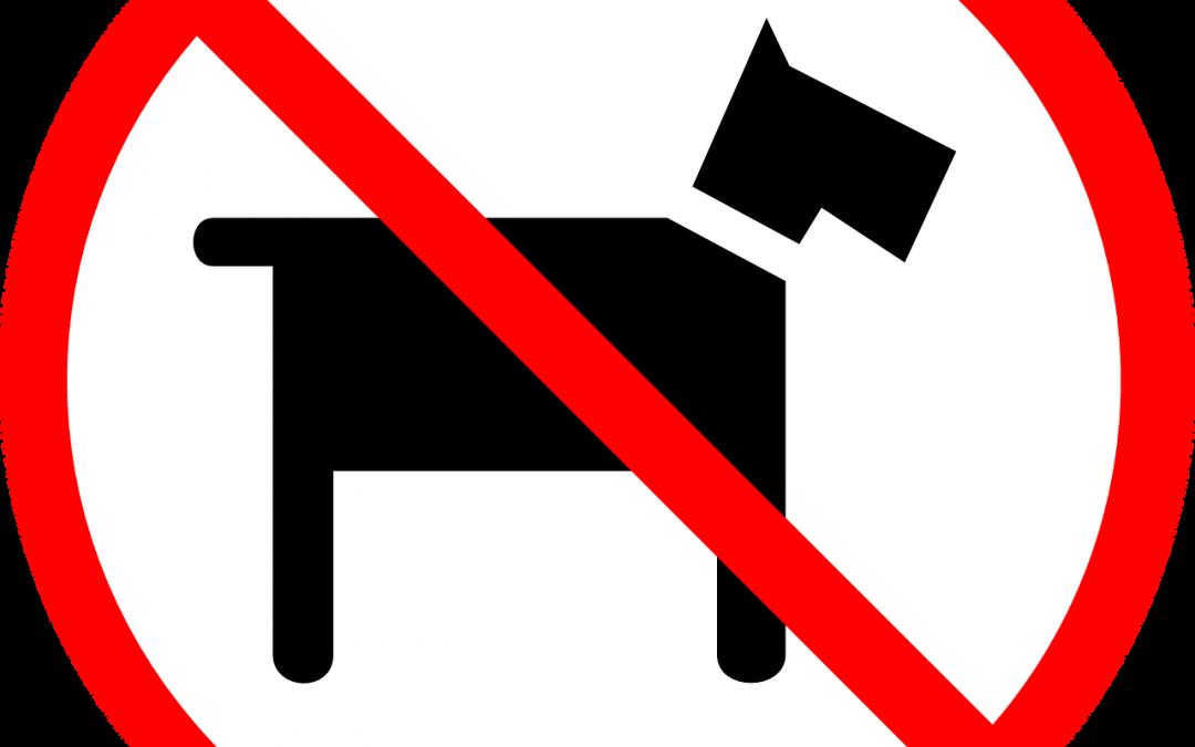 Avança PL que proíbe restrição a animais em condomínios